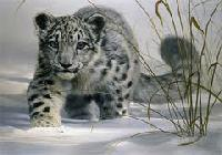 Winter Snow Leopard watch trek