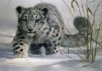 Winter Snow Leopard watch trek
